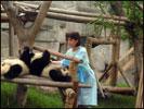 BR Doris LEUTHARD in Panda Research Breeding Base in Chengdu