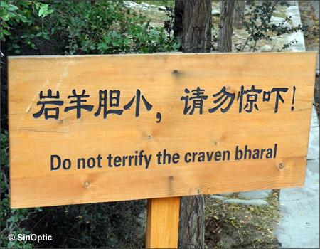 Ne pas terrifier le 'craven' bharal...